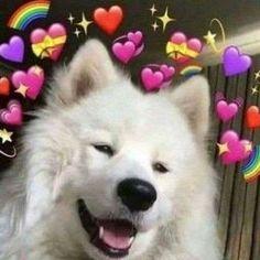 New memes de amor gatos 68 Ideas Cute Animal Memes, Funny Animals, Cute Animals, Samoyed Dogs, Cute Love Memes, Memes Funny Faces, Dog Wallpaper, New Memes, Cute Puppies