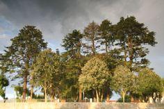 Reflexo(s) // Árvores reflectidas nas águas do rio Tâmega em Chaves (imagem em posição invertida) 2008 junho // Fto Olh 01 037 reflexo(s) 20080816 0207
