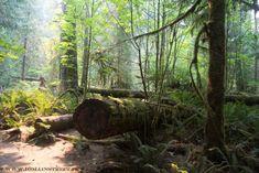 MacMillan provincial Park, Vancouver Island, British Columbia, Canada