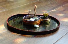 Se você deseja cultivar e acha que não tem espaço, eis uma solução: Um mini jardim de suculentas,acomodadas em latinhas reutilizadas!