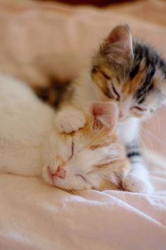 Derpy Kitties!!