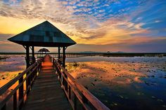 Thailand. Lake of Lotuses