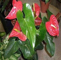 Estas plantas são muito especiais.