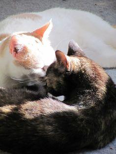 ❤︎ Cat Love, Romantic, Cats, Animals, Gatos, Animales, Animaux, Animal, Romance Movies