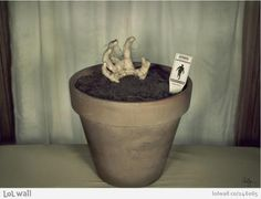 """Now you can have your own zombie at home with this """"Plant your own zombie!"""" garden set, different sizes and different zombies (erm, body parts)."""