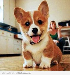 I love corgis. I really want one when I have enough money! I want a boy and I want to name him Ollie. They're just so stinkin' cute! I also love dogs in general.