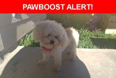 Is this your lost pet? Found in San Antonio, TX 78244. Please spread the word so we can find the owner!  White older small poodle found in the Chasewood neighbourhood. Has rabies tag Must verify city the rabies vaccine was given.  Nearest Address: Near Cutting Creek & Macaway Creek