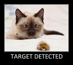 Target detected