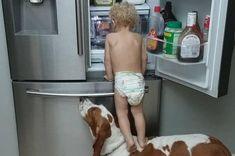 Vynalézavé batole se dostane do ledničky za pomoci svého psa Toddler Climbing, Basset Hound, Teamwork, Funny Memes, How To Get, Weird, Snacks, Refrigerator, Diy Dog