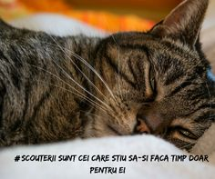 The FDA received reports of two cats who died after being exposed to human topical pain creams. World Pictures, Pictures Images, I Love Cats, Cool Cats, Nursing Process, Veterinary Surgeon, Cat Carrier, All About Animals, Schnauzer