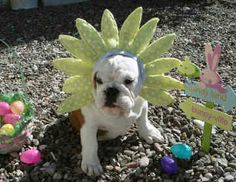 ...I am not the Easter Bunny