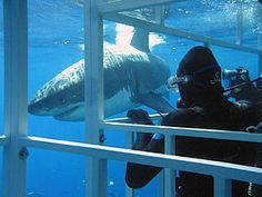 Shark cage, probably the scariest thing ever Adventure Bucket List, Adventure Travel, Shark Diving, Sharks, South Africa Holidays, Shark Cage, Adventure Center, Places Worth Visiting, In And Out Movie
