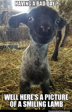 Funny pictures about Having a bad day? Here is a smiling lamb. Oh, and cool pics about Having a bad day? Here is a smiling lamb. Also, Having a bad day? Here is a smiling lamb. So Cute Baby, Lil Baby, Happy Animals, Cute Baby Animals, Wild Animals, Farm Animals, Smiling Animals, Animal Pictures, Baby Goats