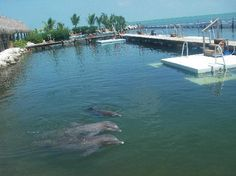 Dolphin Research Center (Grassy Key, Florida)