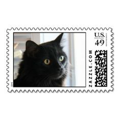 Stunning Black Cat w/ bright eyes, postage