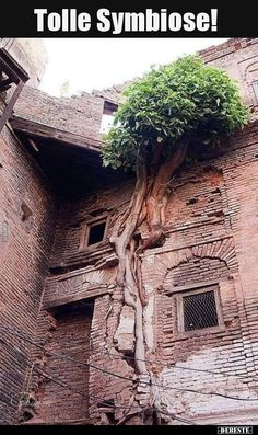 An Abandoned Building. Nature Taking Over. Abandoned Buildings, Abandoned Places, Weird Trees, Dame Nature, Nature Landscape, Unique Trees, Growing Tree, Tree Art, Amazing Nature