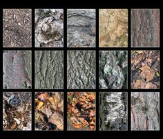 Bark contains 15 high resolution photos of tree bark in various forms. Some fresh, some decayed, some dirty, some clean.