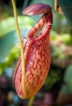 Rare Exotic Plants | Exotic Plants Plus | Nitrogenseekers