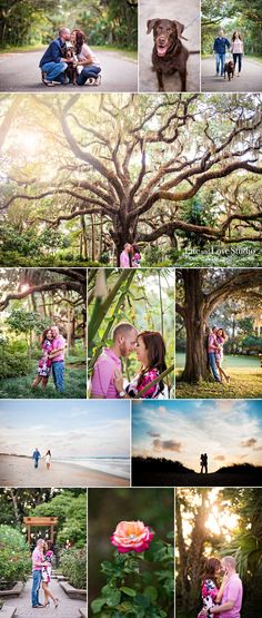 Life and Love Studio, Washington Oaks State Park, engagement, florida, FL, bamboo, Oak tree, dog, chocolate lab, beach, silhouette, fun, candid, St Augustine