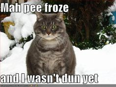 funny animals pic for cold | abruptly fell into a cold winter on the 13th it s been cold with snow ...