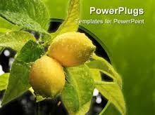 Hasil gambar untuk lemon powerpoint themes