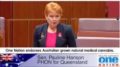 Hemp and Medical Cannabis news aggregation site providing the latest information on the Australian and International Hemp and Cannabis industries. Cannabis News, Medical Cannabis, Pauline Hanson, Hemp