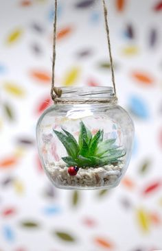 Plant a succulent in a clear Hanging Glass jar. Maybe recycle a candle jar?
