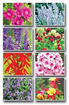 Hummingbird Garden ... flowers ... kwiaty ...  <3 www.24kzone.com