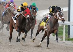 Oaklawn Park: Louisiana Derby likely next for Oxbow   Daily Racing Form