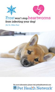 10 Things You Need to Know About Heartworm and Your Dog by Dr. Mike Paul