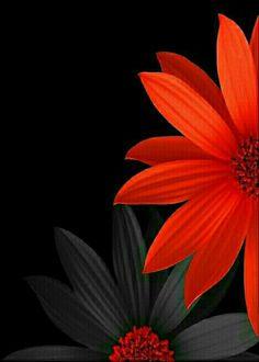 Lily Wallpaper, Flower Background Wallpaper, Flower Phone Wallpaper, Flower Backgrounds, Beautiful Flowers Wallpapers, Cute Wallpapers, Flower Images, Flower Art, Flower Picture Frames
