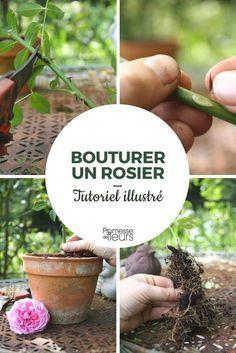 Quand et comment bouturer un rosier ? C'est facile avec nos conseils et notre tutoriel illustré ! #jardinage #rose #rosier