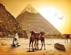 Camels Egypt Cairo Nature Pyramid Stones