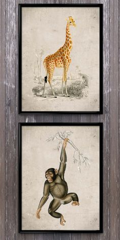 Happy times with this hanging chimpanzee and giraffe.