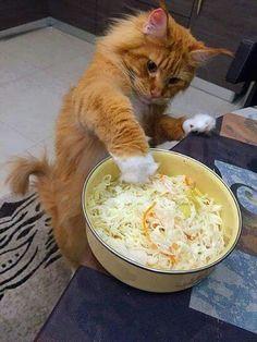 Iz tossing da salad..