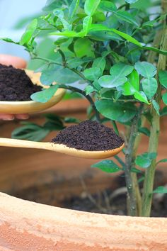 garden care vegetable Using Coffee Grounds To Power Your Garden, Flowers, Plants And More! Backyard Vegetable Gardens, Garden Compost, Container Gardening Vegetables, Veg Garden, Planting Vegetables, Garden Care, Growing Vegetables, Garden Plants, Compost Container