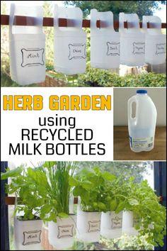 Turn Empty Plastic Milk Bottles into a Herb Garden!