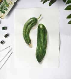 Botany, Biology, Cucumber, Illustrations, Watercolor, Pen And Wash, Watercolor Painting, Illustration, Watercolour