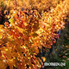 Markus Medinger Picture of the Day | Bild des Tages 19.10.2017 | www.mkmedi.de #mkmedi  Herbst in der Remstaltoskana  #herbst #autumn #fall #wein #vine #winegrower #winemaker #winzer #remstaltoskana  #stetten #remstal #badenwuerttemberg #germany #deutschland  #instagood #photography #photo #art #photographer #exposure #composition #focus #capture  #365picture #365DailyPicture #pictureoftheday #bilddestages #landscape  @badenwuerttemberg @visitbawu @stuttgart.meine.stadt @0711stgtcty…