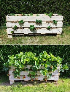 Strawberry Pallet Planter Project:Pallet planters are the cheapest, most effective and best looking way to maximise your garden space.