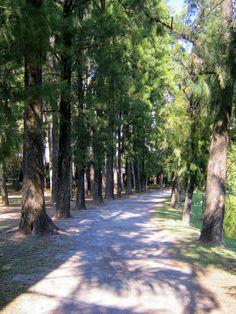 Bosque do Parque.