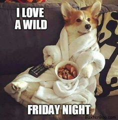 Corgi in a white robe watching tv holding the remote and eating doggy snacks Cute Puppies, Cute Dogs, Dogs And Puppies, Baby Animals, Funny Animals, Cute Animals, Animal Fun, Animal Memes, Corgi Dog