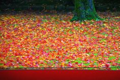 京都の紅葉 瑠璃光院・源光庵・醍醐寺 | TRAVEL | iMobile