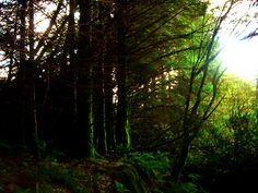 Shrouded forest (3648x2736, forest)  via www.allwallpaper.in