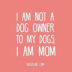 #dogmom #furkids