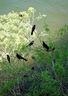 """""""Exploring Arizona""""  While lunching on Crystal  Lake, Arizona, I spotted these perching birds. © 2011 by Elaine Grey"""