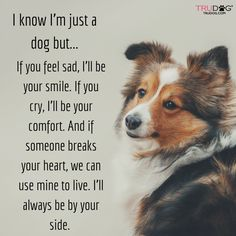 Sheltie....always by your side