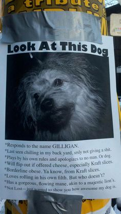 HAHAHA!  Best dog poster ever!