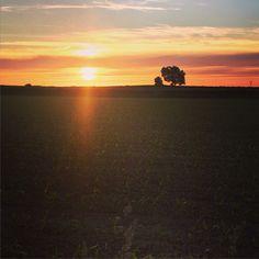 Promenade champêtre #sunrise #sun #pretty #orange  #sky #skyporn #nature #clouds #horizon #gorgeous #night #silhouette #instasky #all_sunsets #nature #tree #light #green #skylovers #mothernature #photooftheday #instadaily #instagood #amazing #beautiful #bestoftheday #art #igtravel #all_shots #mytravelgram