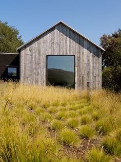 Landscape designer Janell Denler Hobart planted a low-water evergreen meadow using graphic clusters of Pennisetum spathiolatum.